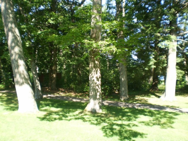 The Stone House had many trees surrounding it.