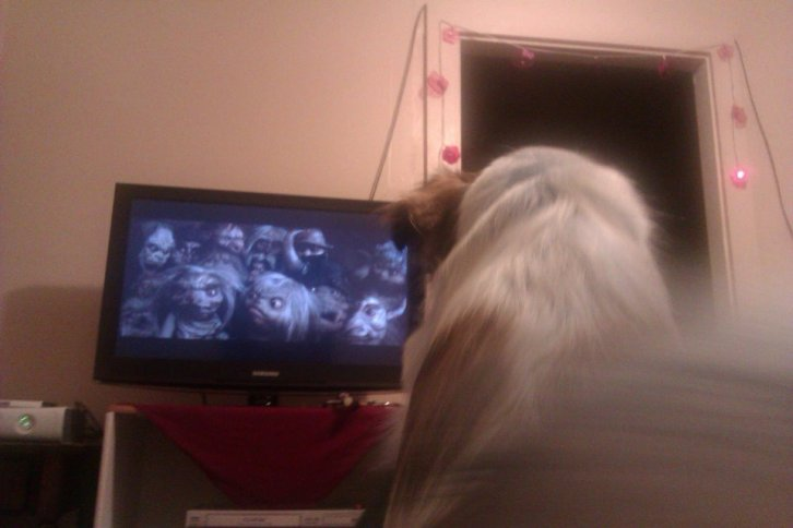 But Ludo also protected me from goblins when we watched Labyrinth. This is him, sitting on my lap, barking at the goblins back in 2011.